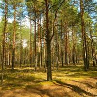 Поход в лес.. приглашаю!!!.