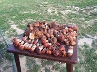 А в Подмосковье водятся... грибы!!!