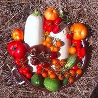 Любимые летне-осенне-урожайные натюрморты (много фото)