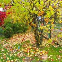 Осенние работы в саду и в огороде