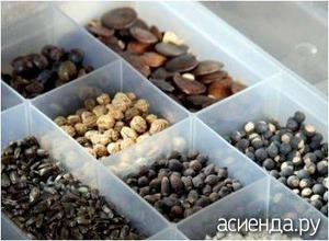 Хранения семян как сохранить семена правильно