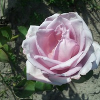 Последние цветы...