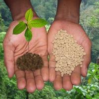 Суперфосфат и как его применять в огороде