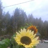 Последнии цветочки и стрекоза.