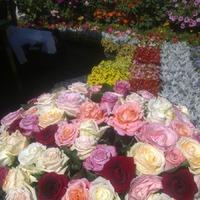 На фестивале садов и цветов.