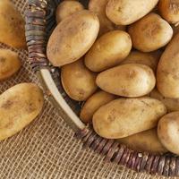 Как правильно хранить картофель. Часть 1