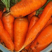 Как правильно хранить морковь. Часть 3