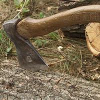 Наступили холода, или какие дрова лучше?
