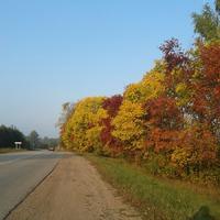 Цветочные наброски осени