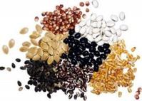 Распространенные ошибки при выборе семян