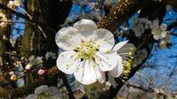Защита сада от весенних заморозков