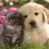 Полезные советы для владельцев домашних животных