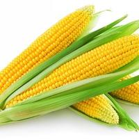 Всходит кукурузка