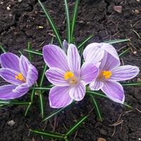 Ура!!! Мы наконец-то выбрались в сад!!! Весна идет!!! Душа поет!!!