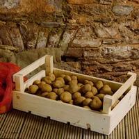 Ошибки в хранении картофеля