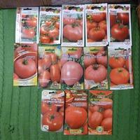 Развитие рассады томатов Кострома поэтапно!