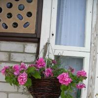 Цветы для дачных кашпо и вазонов готовы!