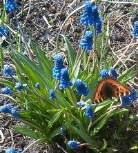 Ранняя и стремительная сибирская весна