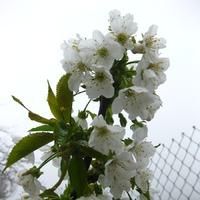 Ой, и красивая весна здесь, в Ивановке!