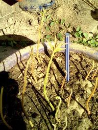 Таки посадите ореховый сад