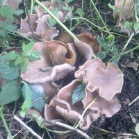 Какие это грибы?