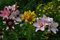 Мои цветы на даче..