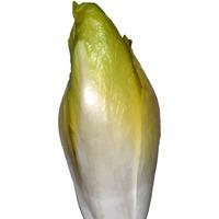 Салатный цикорий – это зелень и зимой, и летом
