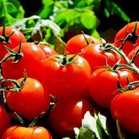 Переверните помидоры корнями вверх