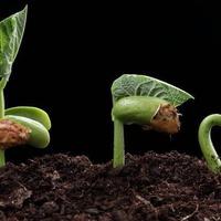 Как ускорить прорастание семян?