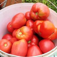 Отчет по рецептам для помидор