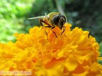 Эстетика насекомых