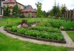Дизайн современного огорода