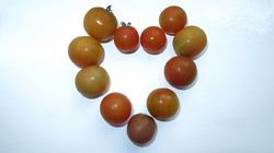 Мой неудачный урожай томатов 2016