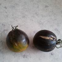 Приглашаю всех на помидорное опознание )))
