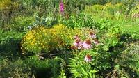 Мой сад в августе 2016