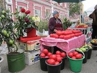 Вот такие помидоры растут в Минусинске.