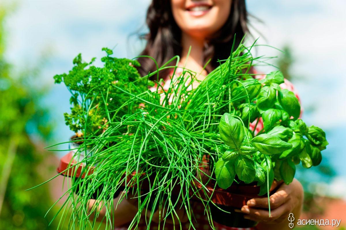 Сбор трав для похудения рецепты, сжигающие жир
