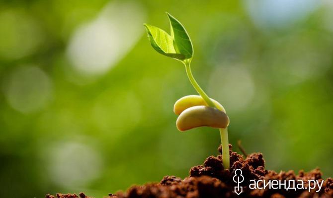Стимуляторы для ваших растений