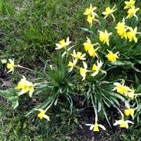 Весну вспоминая...