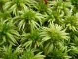 Для чего мох сфагнум добавляют в грунт
