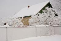 Снег на даче: помощь или вред?