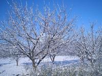 Можно ли бороться с вредителями зимой?