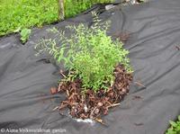 Спанбонд или нетканый материал на куче сорняков