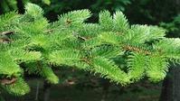 О природном  укрывном материале для растений