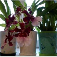 Я тут купала орхидеи
