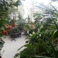 Мой зимний сад)