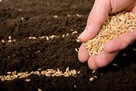 Когда сеять рассаду. Формула расчёта