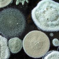 Как бороться с плесенью и грибком