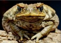 Как меня посетила жаба