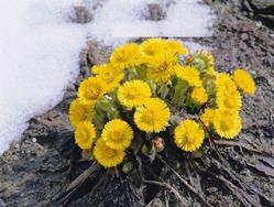 Самые отважные растения